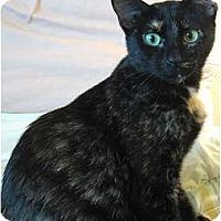 Adopt A Pet :: Melody - Portland, OR