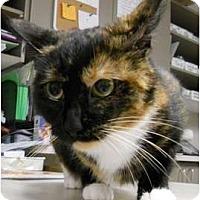 Adopt A Pet :: Julliette - Maywood, NJ