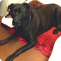 Adopt A Pet :: Molly - Gilbert, AZ