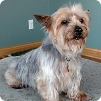 Adopt A Pet :: Dora - Omaha, NE