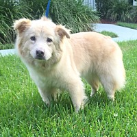 Adopt A Pet :: Fluffy - Mount Pleasant, SC