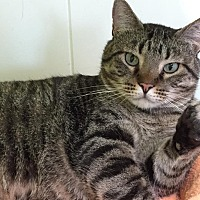Adopt A Pet :: Brownie - Topeka, KS