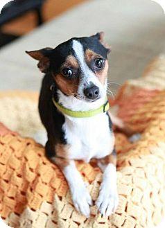 Chihuahua Mix Dog for adoption in Matthews, North Carolina - Monroe