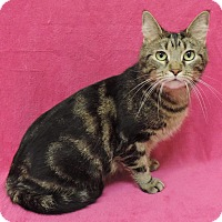 Adopt A Pet :: Jazzy - Indianapolis, IN