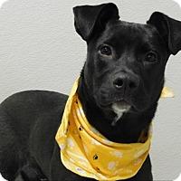 Adopt A Pet :: Fletcher - Topeka, KS