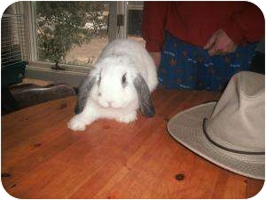 Lop-Eared Mix for adoption in Long Valley, New Jersey - Puffin & Holly