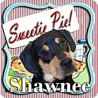 Adopt A Pet :: Shawnee - Mechanicsburg, PA