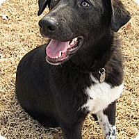 Adopt A Pet :: Baby Girl - Somers, CT