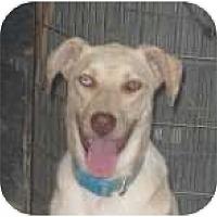 Adopt A Pet :: Rascle - Colorado Springs, CO