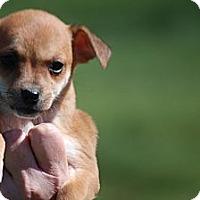 Adopt A Pet :: Demi - Providence, RI