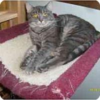 Adopt A Pet :: Cupid - Milwaukee, WI