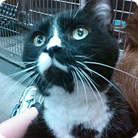 Adopt A Pet :: Lucky - Lawrenceville, GA