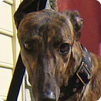 Adopt A Pet :: Jill - Oak Ridge, NC