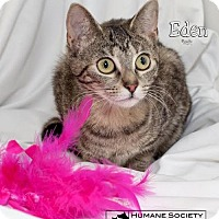 Adopt A Pet :: Eden 5584 - Fort Mill, SC
