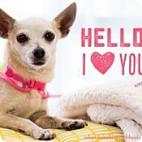 Adopt A Pet :: Isabella - Mesa, AZ