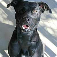 Adopt A Pet :: Sharpie - Hilton Head, SC