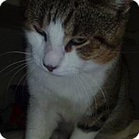 Adopt A Pet :: Winchester - Hamburg, NY