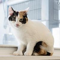 Adopt A Pet :: Cauliflower - St. Paul, MN