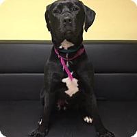Adopt A Pet :: Sabrina - Philadelphia, PA