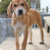 Adopt A Pet :: *Ty - PENDING - Westport, CT