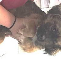 Adopt A Pet :: Jasper - Dawson, GA