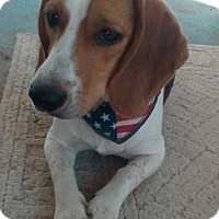 Adopt A Pet :: Kody - Apple Valley, CA