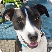 Adopt A Pet :: Auora - YERINGTON, NV
