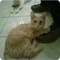 Adopt A Pet :: Marmaduke - Los Angeles, CA