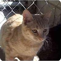 Adopt A Pet :: Nicolette - El Cajon, CA