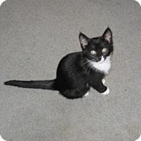 Adopt A Pet :: Cookie - Kirkwood, DE