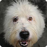 Adopt A Pet :: Bracewell - Norwalk, CT