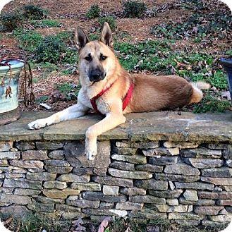 German Shepherd Dog Mix Dog for adoption in Prince Frederick, Maryland - Maverick