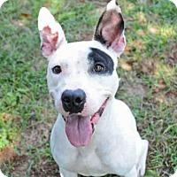 Adopt A Pet :: GWEN - Tallahassee, FL