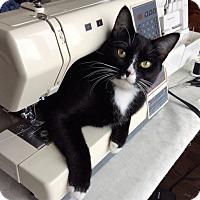 Adopt A Pet :: Gracie Lou - Vancouver, BC