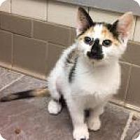 Adopt A Pet :: Cherry Blossom 6550 - Columbus, GA