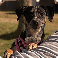 Adopt A Pet :: FRECKLES--SIBLING TO GABE! - Bluff city, TN