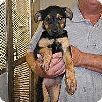 Adopt A Pet :: Jodi - Fort Scott, KS