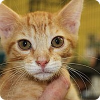 Adopt A Pet :: Calvin - Santa Monica, CA