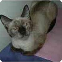 Adopt A Pet :: Aurora - Arlington, VA