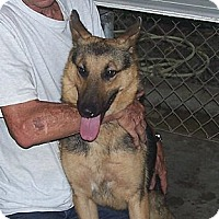 Adopt A Pet :: Chance - Little River, SC