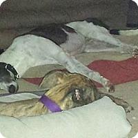 Adopt A Pet :: Cdc Mason - Knoxville, TN