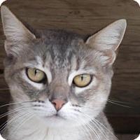 Adopt A Pet :: FOXY - Crescent City, CA