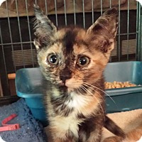 Adopt A Pet :: Kelly - Lawrenceville, GA