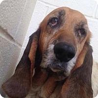 Adopt A Pet :: Kloey - Littleton, CO