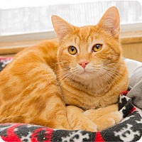 Adopt A Pet :: Dr. Who - Corinne, UT