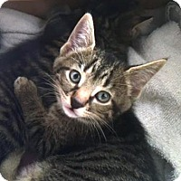 Adopt A Pet :: Bobby - Owatonna, MN