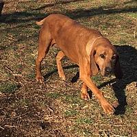 Adopt A Pet :: Rosebud - Monterey, VA