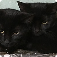 Adopt A Pet :: Mia - Covington, KY