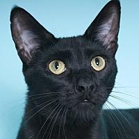Adopt A Pet :: Goblin - Chicago, IL
