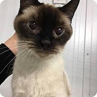 Adopt A Pet :: TAI - THORNHILL, ON